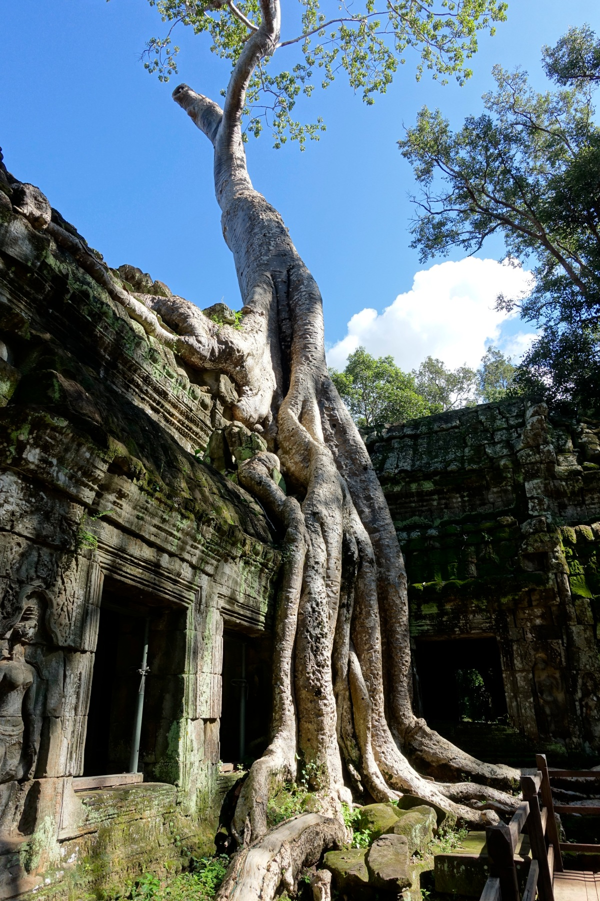 Angkor, What!?